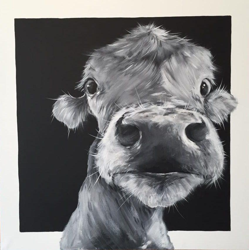 Cow_169