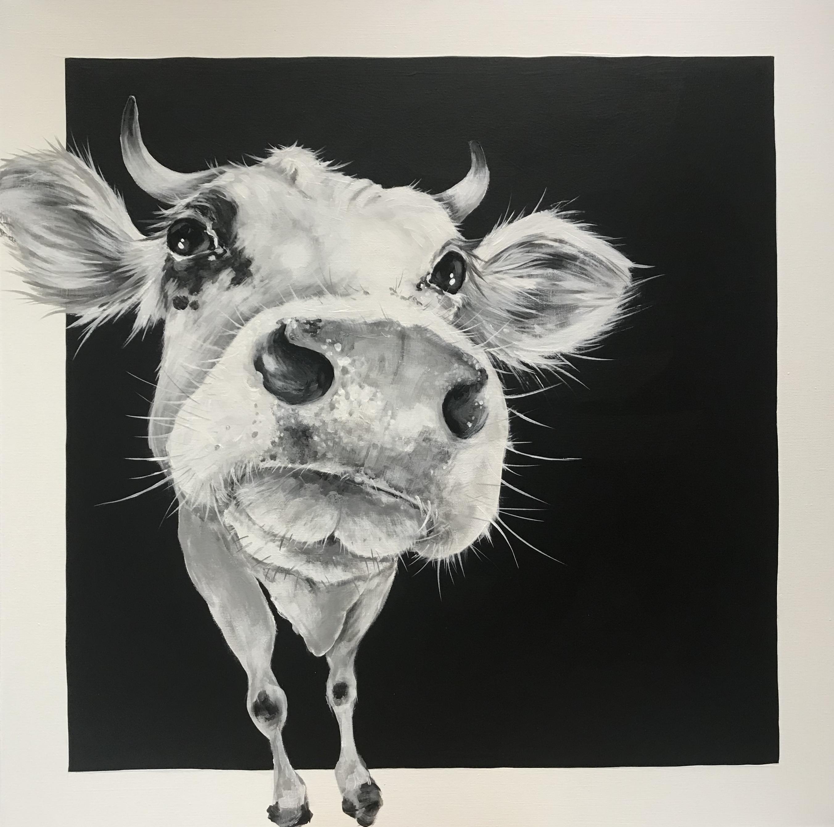 cow 254